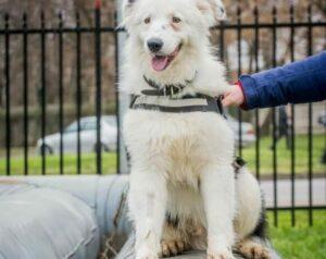 Elvis wurde von einem Tierschutzverein übernommen!