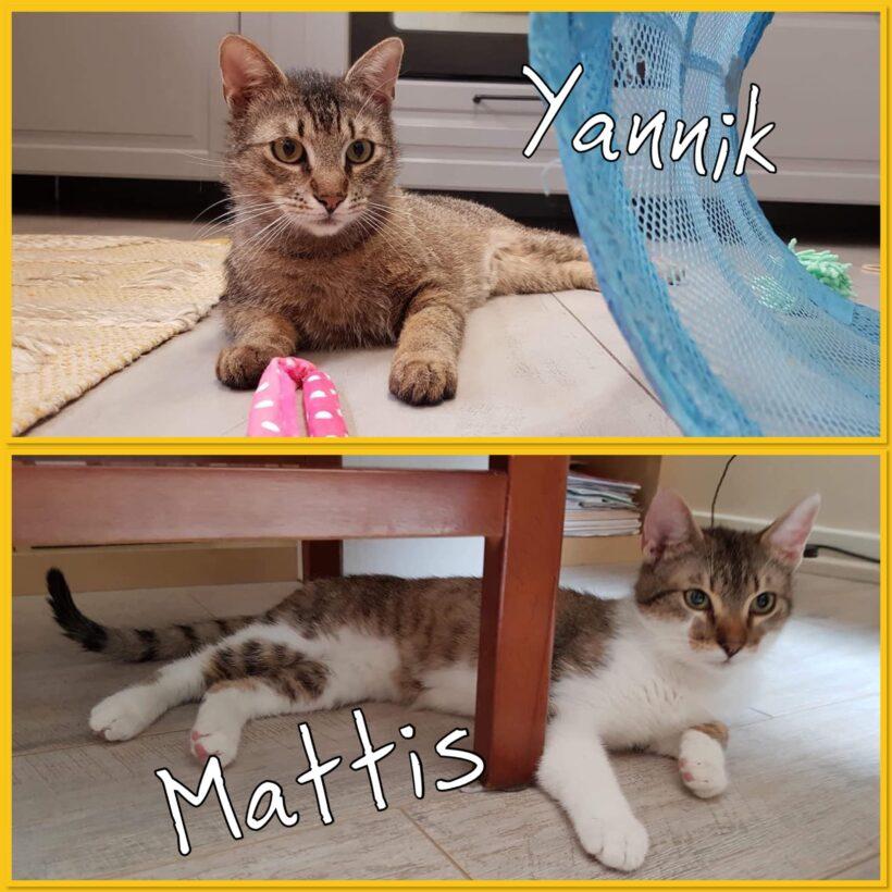 YANNIK & MATTIS – ca. 11 & 9 Monate