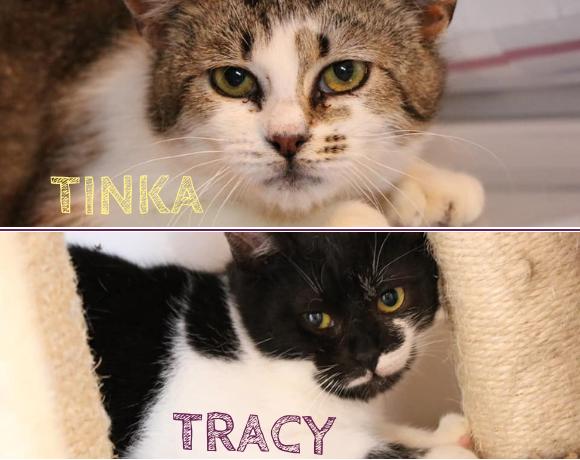 TRACY&TINKA – ca. 6 Monate