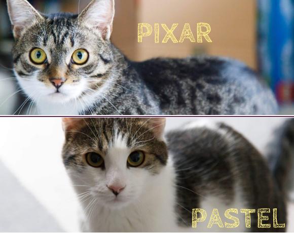 PIXAR&PASTEL – ca. 1 Jahr