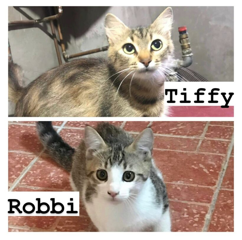 TIFFY&ROBBI – ca. 1 Jahr