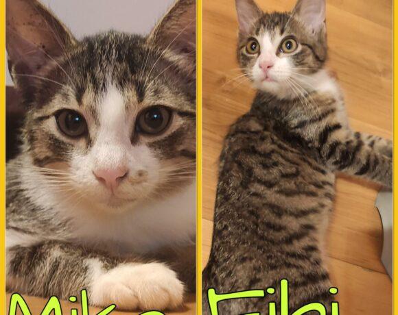 MIKO&FIBI – ca. 3,5 Monate