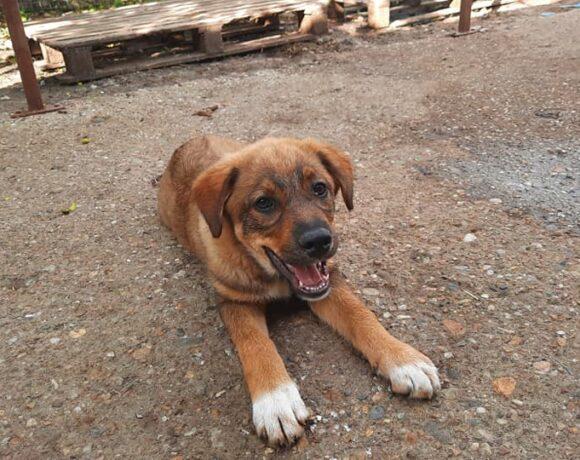 SORA – ca. 4 Monate