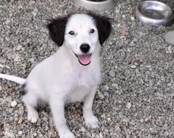 SMILEY – ca. 3 Monate