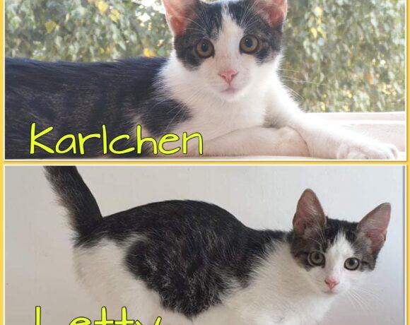 KARLCHEN&LETTY – ca. 4 – 5 Monate