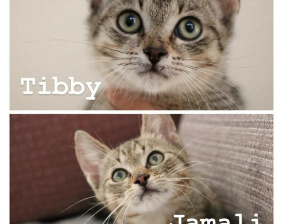 JAMALI&TIBBY – ca. 3 Monate